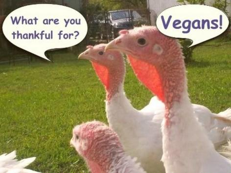 what are you thankful for vegans