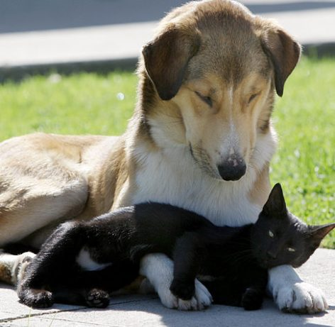 Be Kind Whenever Possible, It Is Always Possible cat & dog