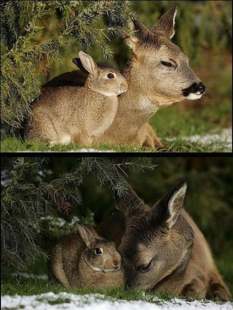 Be Kind Whenever Possible It Is Always Possible Deer & Rabbit