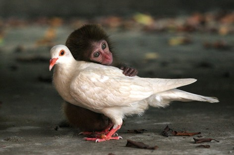 Be Kind Whenever Possible It Is Always Possible macaque dove