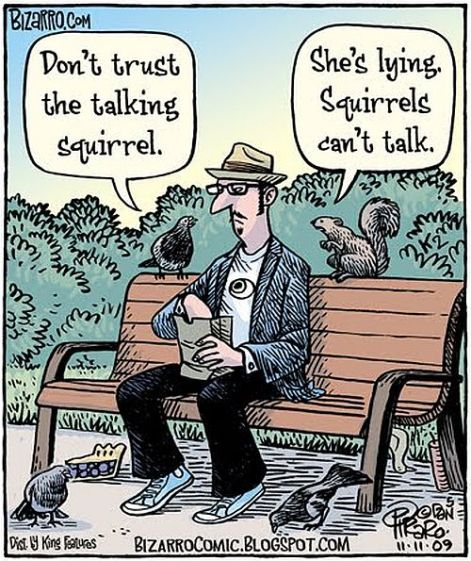 don't trust the talking squirrel