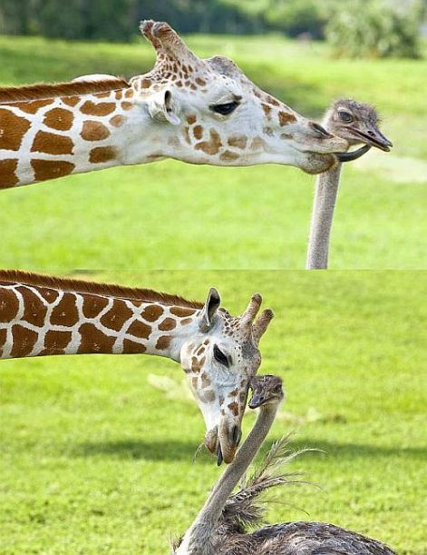 Giraffe & Ostrich Be Kind Whenever Possible.  It Is Always Possible