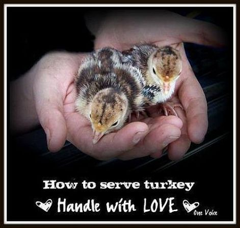 How to serve turkey handle with love