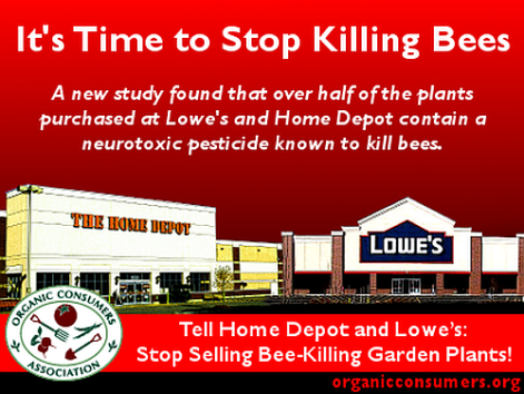 it's time to stop killing bees a