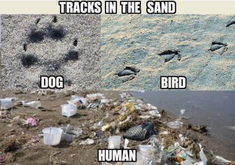 tracks in the sand dog bird human