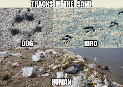 tracks in the sand dog bird human