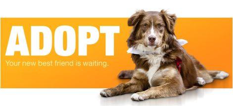 bnr-adopt-a-pet