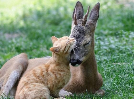 Cat & Deer Be Kind Whenever Possible, It Is Always Possible