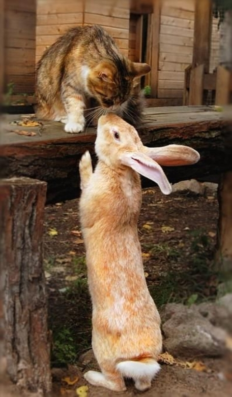 Cat & Rabbit Be Kind Whenever Possible, It Is Always Possible