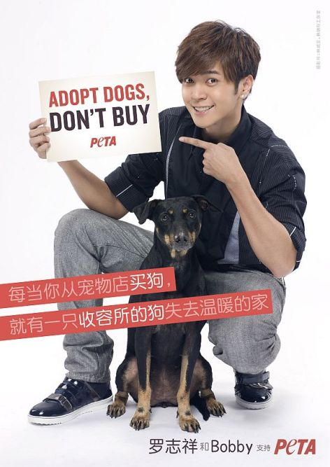 Adopt Dogs Don't Buy Spay Neuter Adopt Rescue