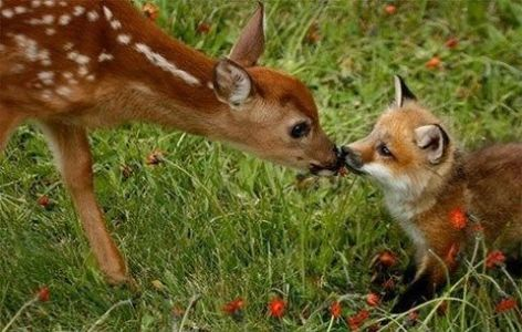 Deer & Fox Be Kind Whenever Possible, It Is Always Possible