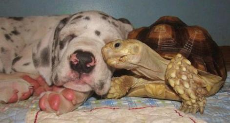 Puppy & Tortoise Be Kind Whenever Possible, It Is Always Possible