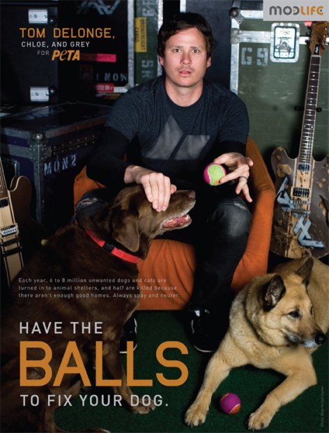 Tom DeLonge Have The Balls To Fix Your Dog Spay Neuter Adopt Rescue