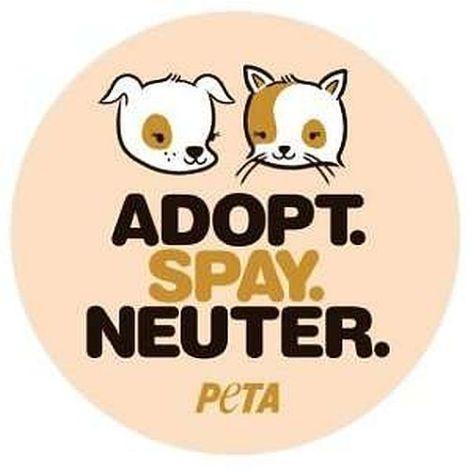 Adopt Sapy Neuter Peta Rescue