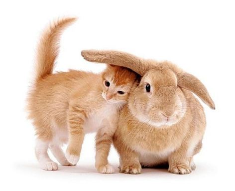 Kitten & Bunny Be Kind Whenever Possible, It Is Always Possible