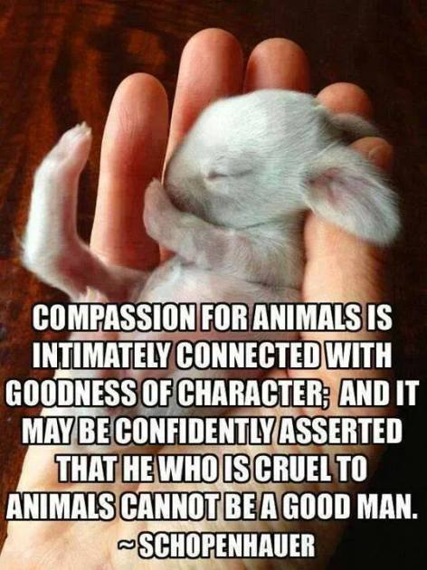 Schopenhauer Compassion for animals