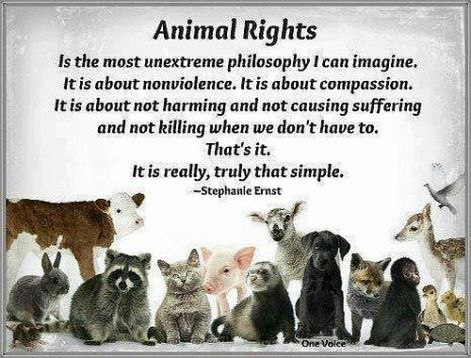 Stephanie Ernest Animal Rights is